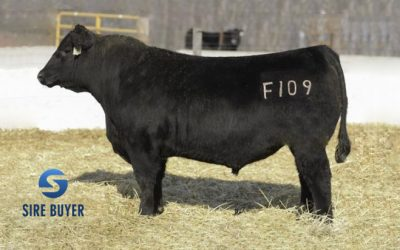 Angus Semen For Sale: IS10-540