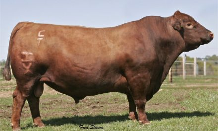 Red Angus Semen For Sale: IS10-540