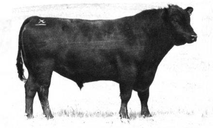 Angus Semen For Sale: KS10-644