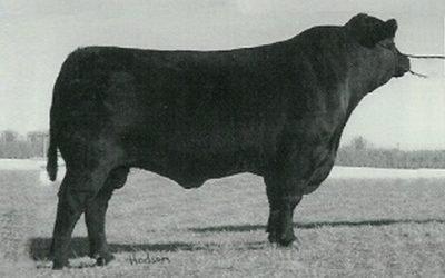 Angus Semen For Sale: SB10-1157